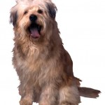 How Your Health Can Benefit from Animal Companions